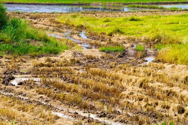 Jordbruksmark – läromedel i geografi åk 4–6