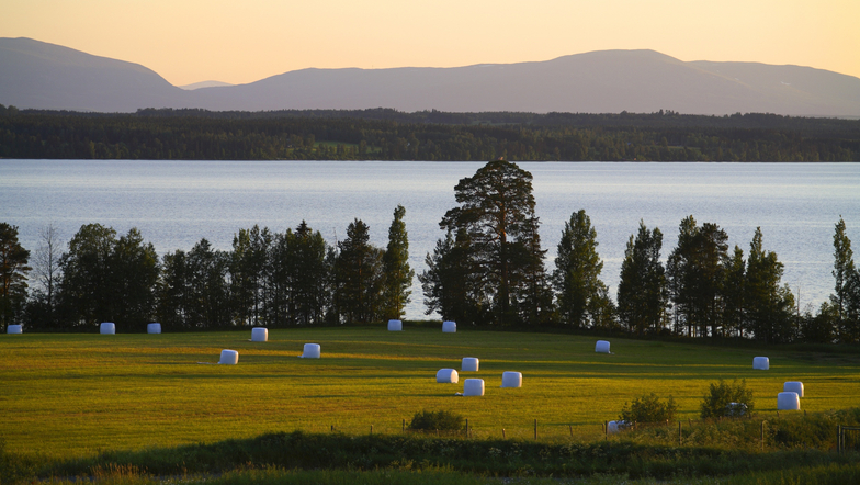 Naturtyper i Sverige